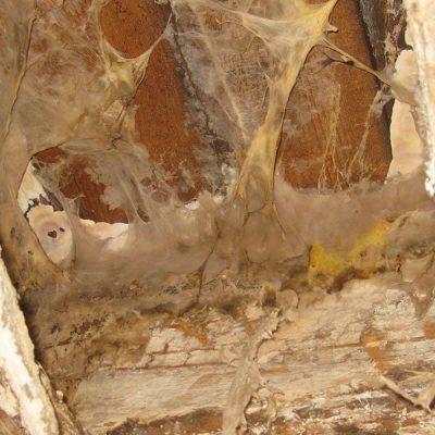 Traitement de la mérule | Humidity & Works à Woluwe-Saint-Pierre, Bruxelles
